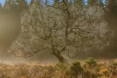 Fog IV